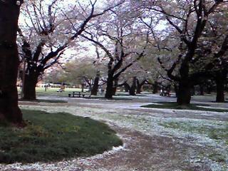 花吹雪も壮大