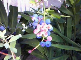 ナリモノ・夏の庭