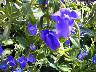 花ばな・夏の庭